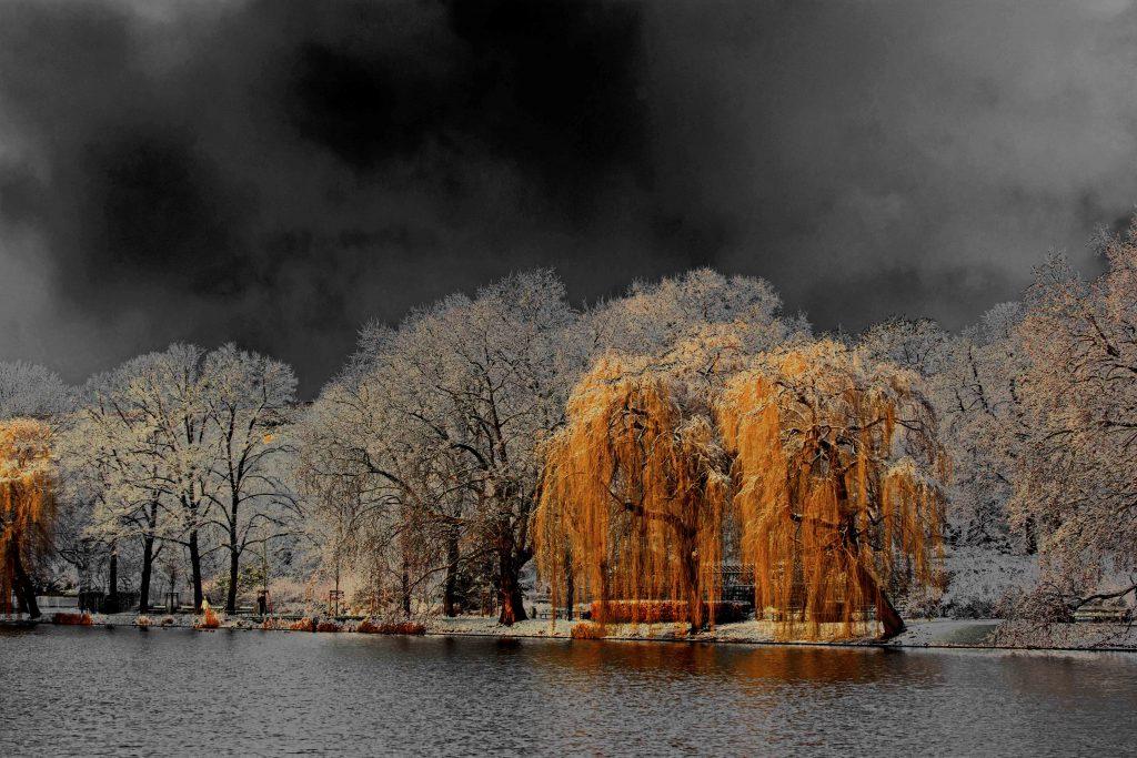 Lietzensee im Winter