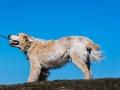 hund_1419.jpg